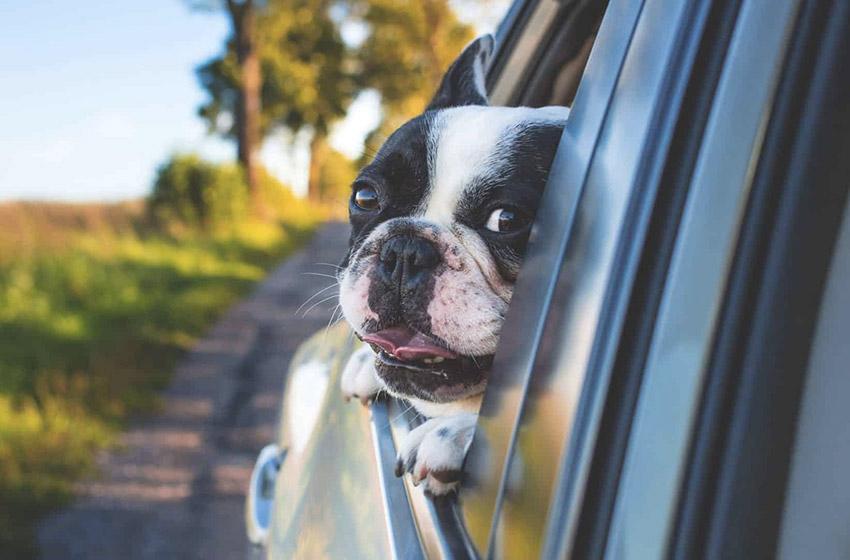 Protéger l'intérieur de votre voiture de vos animaux de compagnie